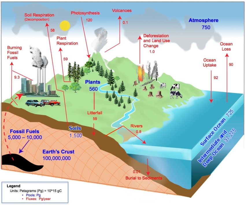 Earth's carbon cycle, estimated carbon storages and fluxes 2017.